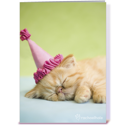 Happy Birthday Kitten In Party Hat Greeting Card Png 435x429