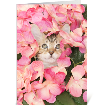 Kitten Peeking from Pink Blossoms
